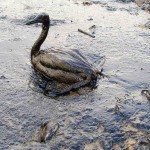 Magnetizing Oil May Clean Up Spills