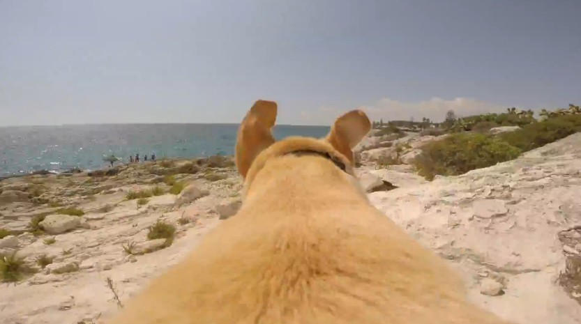dog loves the sea