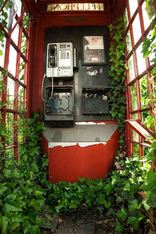 Botanical Britain Winner. Green and Red Telephone Box