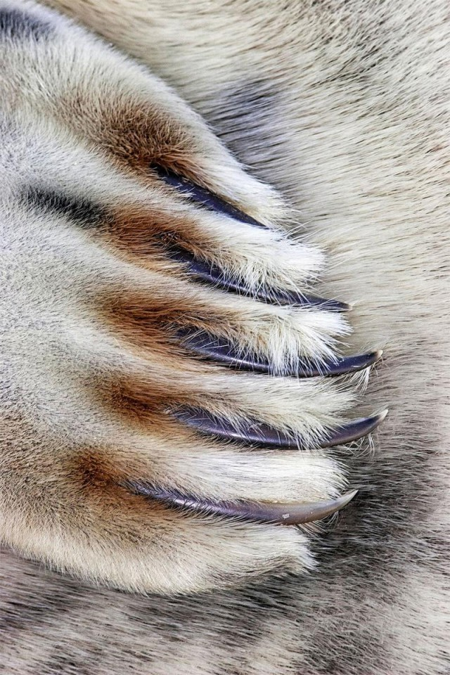 Close to Nature Winner. Grey Seal Claws, Lincolnshire