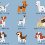 Dogs of the World- cute posters