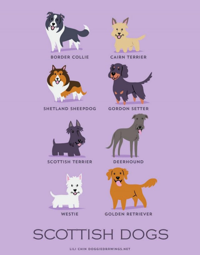 Dogs of the World (3)