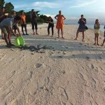 150 baby Turtles make It to the Sea