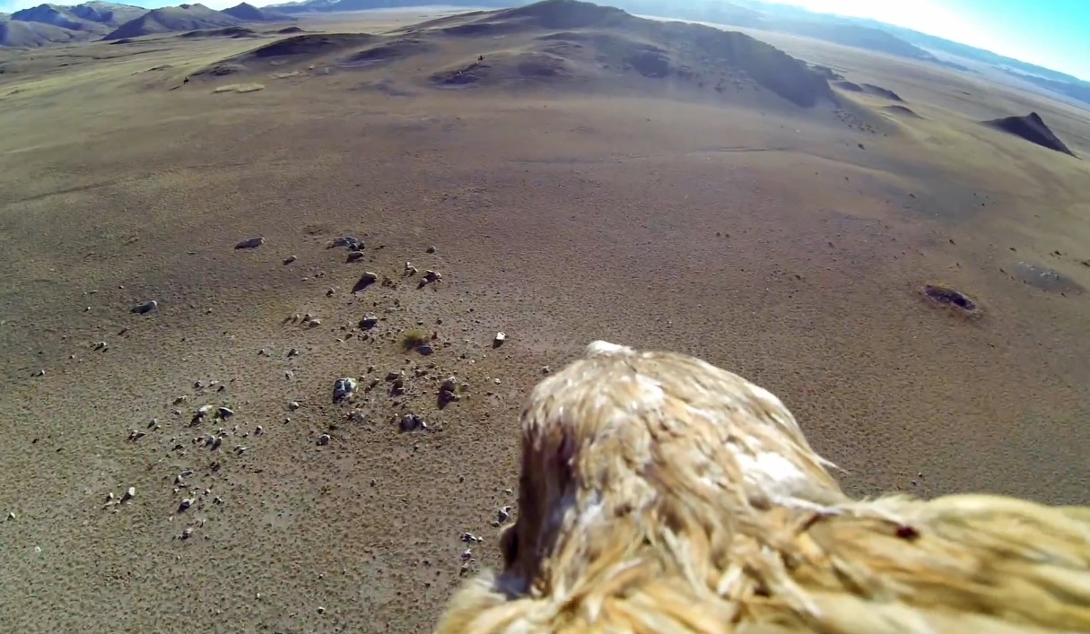 Golden Eagle POV