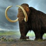 The Wooly Mammoth is Back! (Maybe)