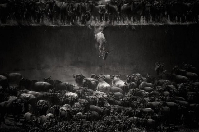 National Geographic Photo Contest 2014 (8)