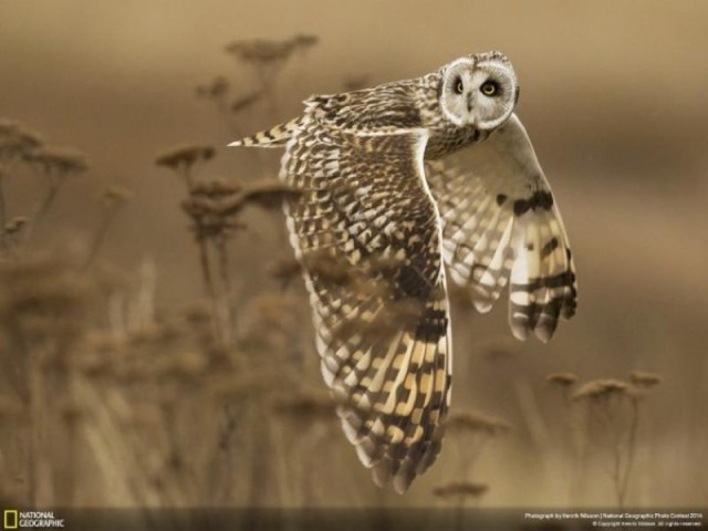 National Geographic Photo Contest 2014 (5)