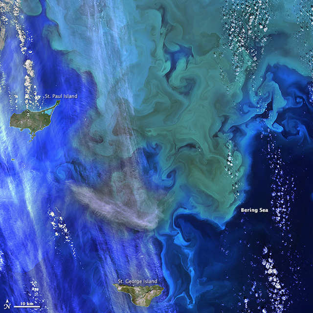 Phytoplankton bloom near Alaska's Pribilof Islands 2
