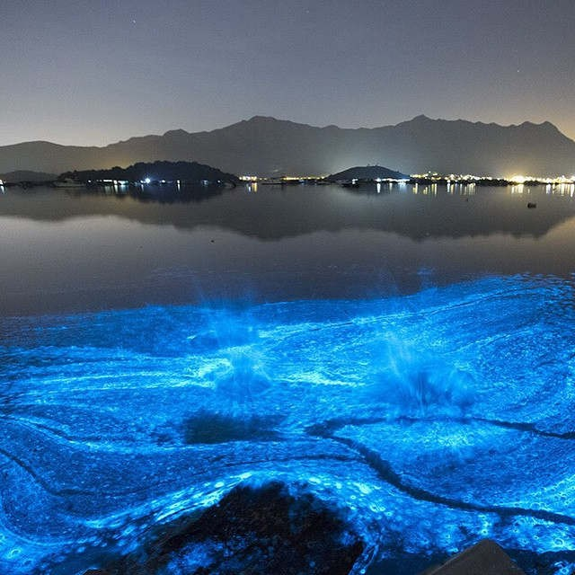 glowing blue sea in Hong Kong