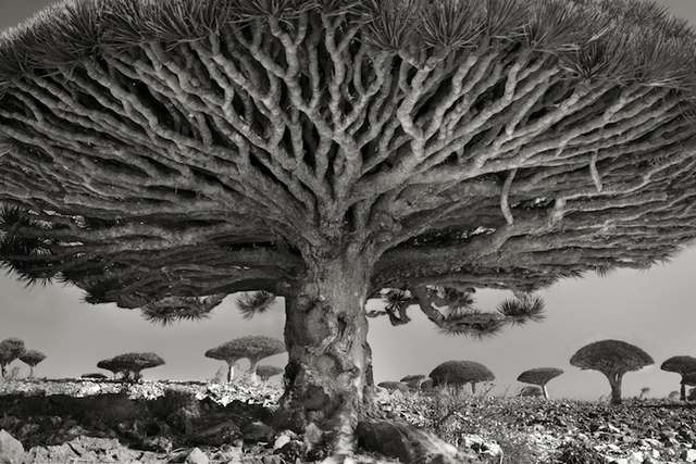 Heart of the Dragon tree