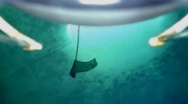 Creature on the Antarctic seabed