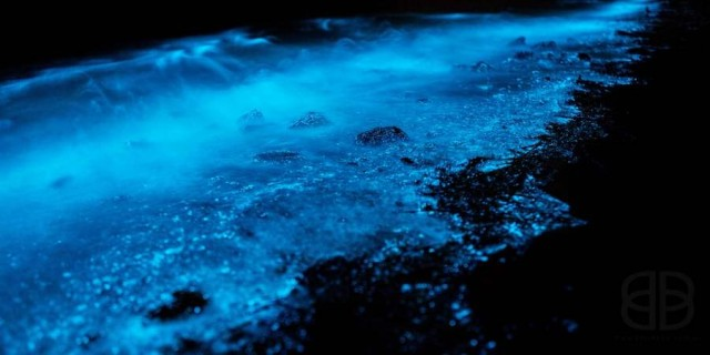 Bioluminescence phenomenon at River Derwent, Tasmania (6)