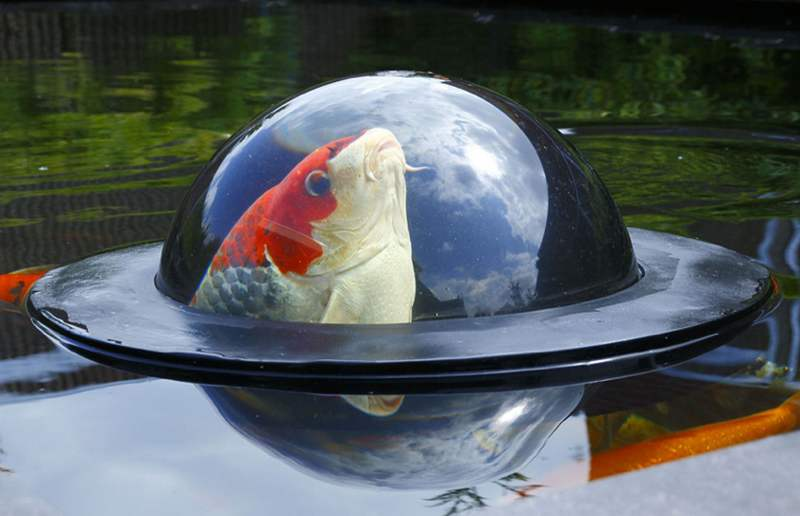 Floating Fish Dome (4)