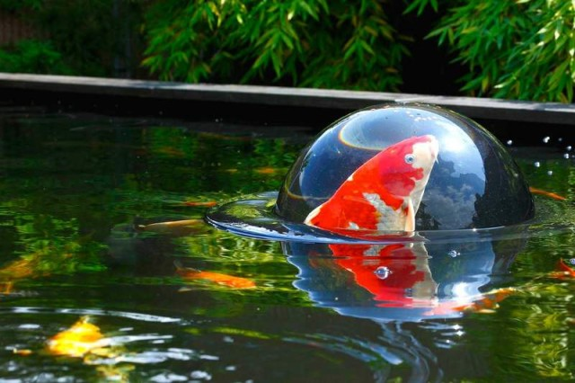 Floating Fish Dome (3)