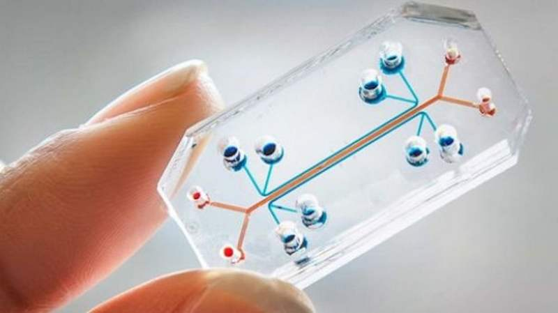 Lung-on-a-Chip computer chip