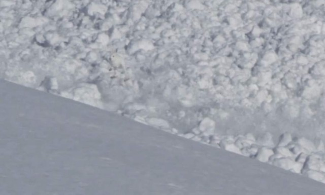 Rabbit in Avalanche  2