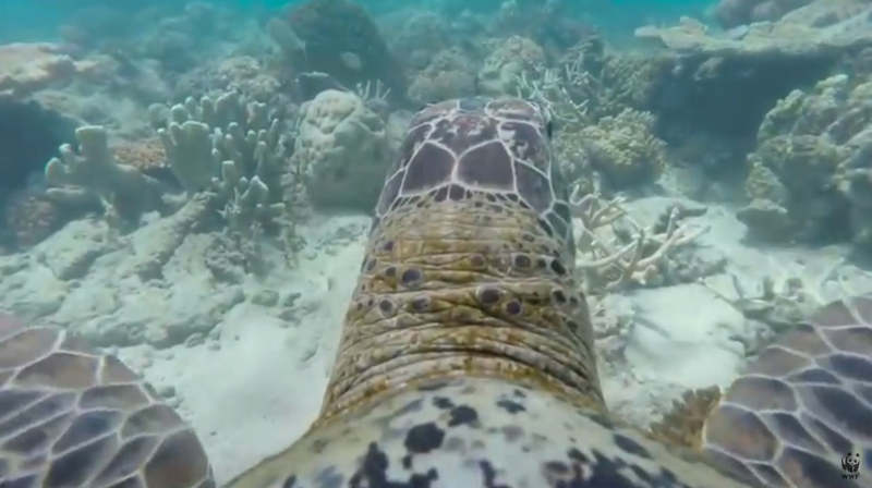Turtle's eye-view of the Great Barrier Reef
