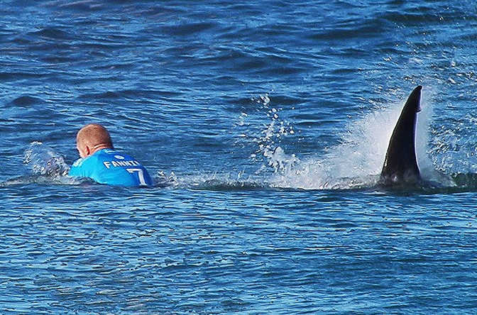 Surfer survives Shark attack