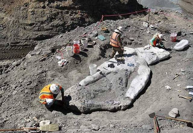 Whale fossil discovered in Santa Cruz mountains