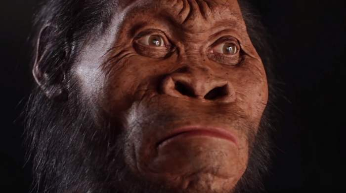 Homo Naledi our new ancestor