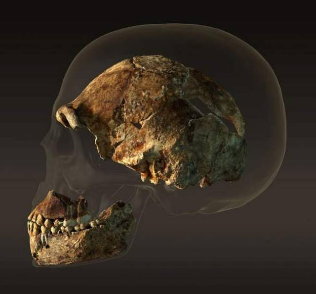 Homo Naledi our new ancestor 2