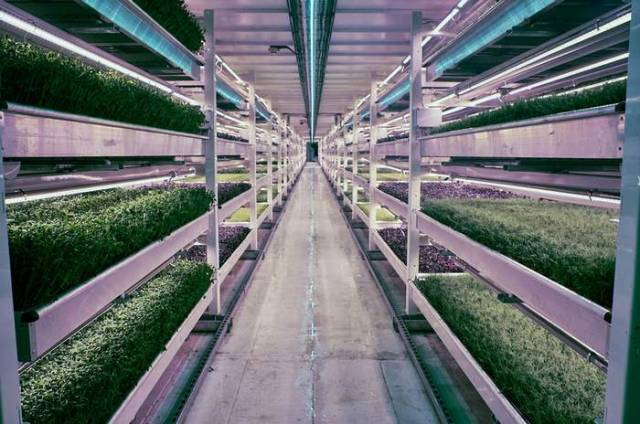 Largest Subterranean Hydroponic Farm in London
