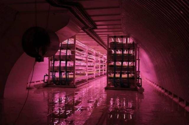 Largest Subterranean Hydroponic Farm in London (3)