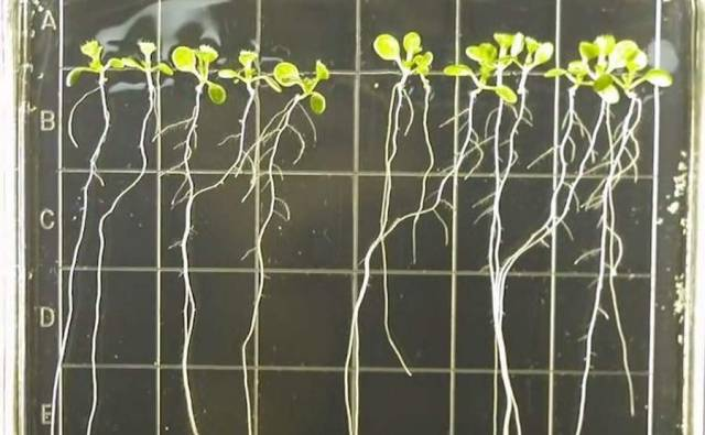 Cultivating Plant Growth in ISS (3)