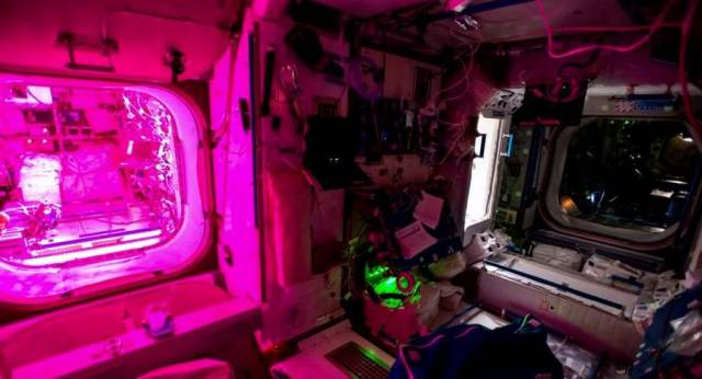 Cultivating Plant Growth in ISS (2)