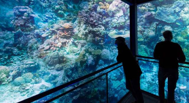 Majestic panorama of the great barrier reef (7)