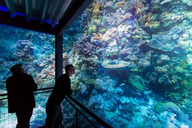 Majestic panorama of the great barrier reef (6)