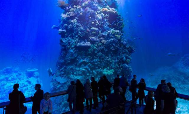 Majestic panorama of the great barrier reef (5)