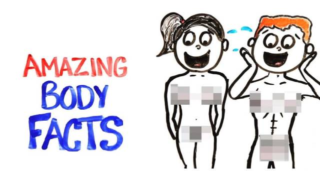 facts about your body
