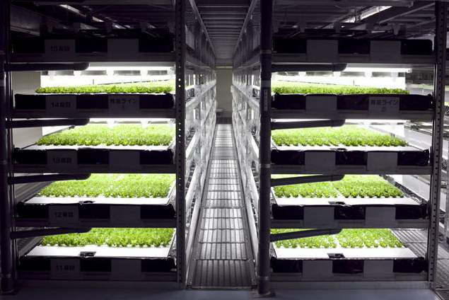 Robotic lettuce factory is under construction in Japan