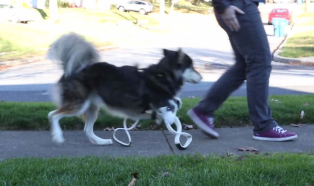 Derby the Dog gets new 3D-printed Legs