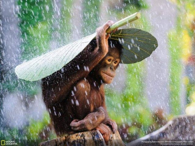 National Geographic reveals its top pictures of 2015 (11)