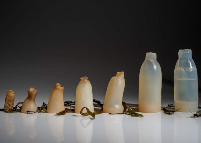 Biodegradable Water Bottles made by Algae