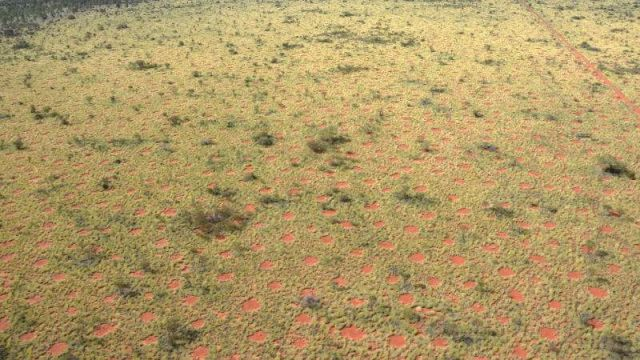 Fairy Circles in Australia