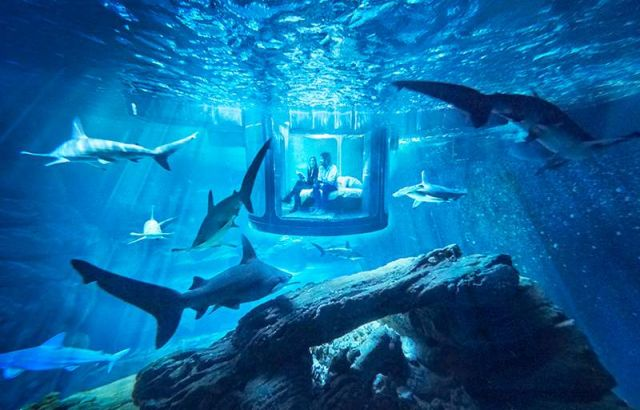 Glass room in the shark tank at the Paris Aquarium