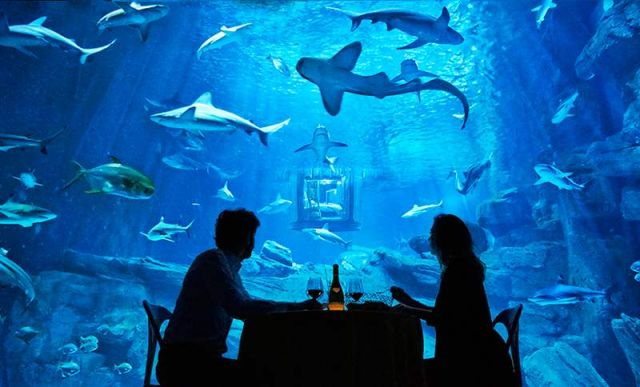 Glass room in the shark tank at the Paris Aquarium (5)