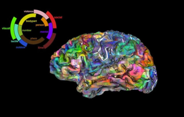 3D Map of the Brain shows where we store thousands of words