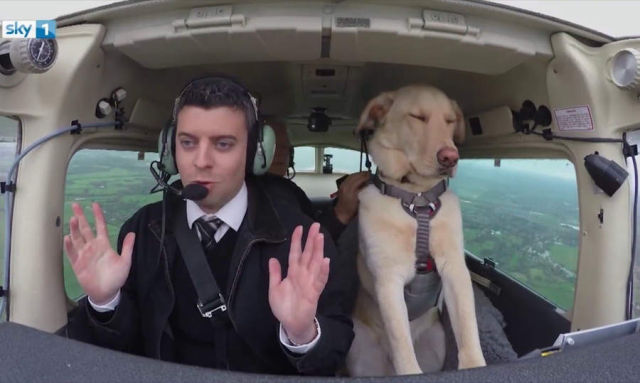 A Dog Flying a Plane