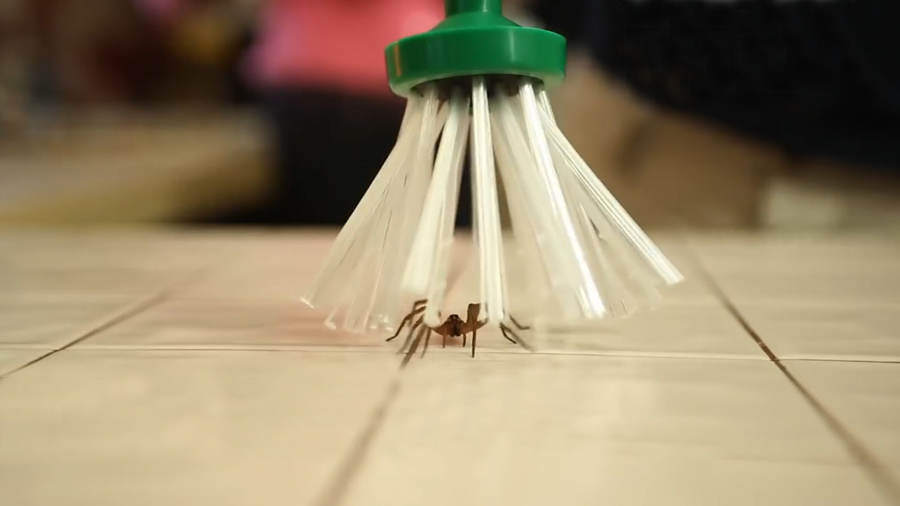 A clever Spider catcher