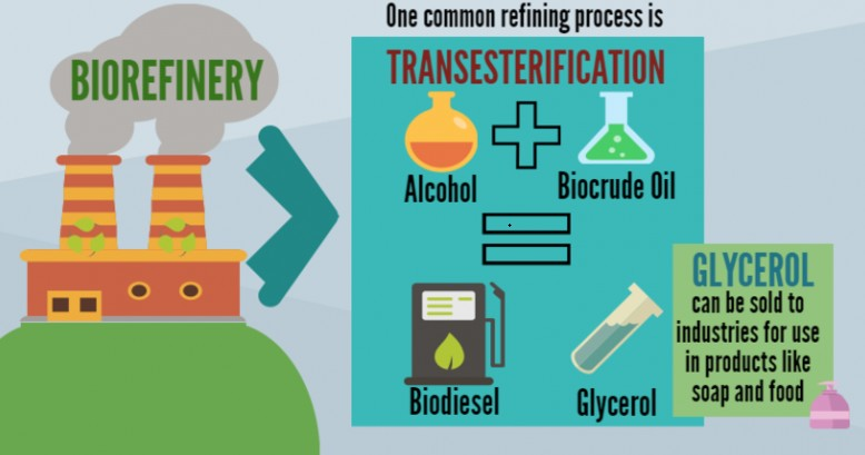 Everything about Bioenergy