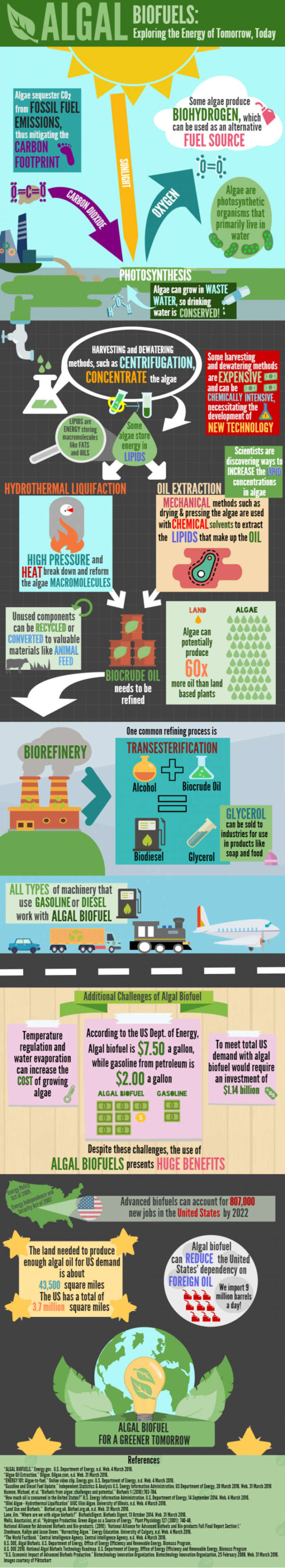 Everything about Bioenergy infographic