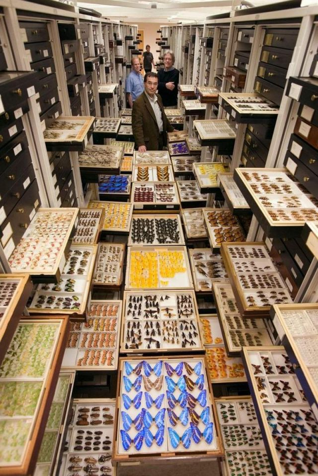 Secret Collections of The National Museum of Natural History (2)