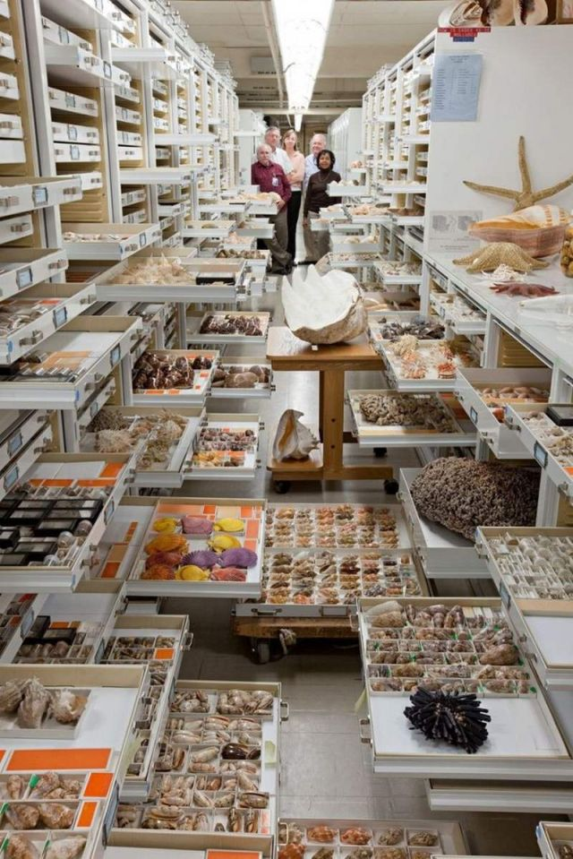 Secret Collections of The National Museum of Natural History (4)