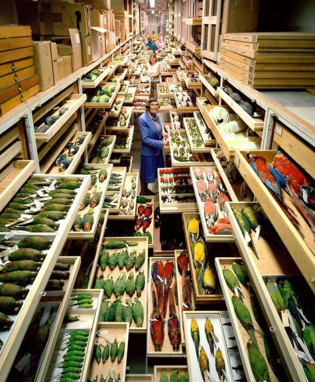 Secret Collections of The National Museum of Natural History (5)