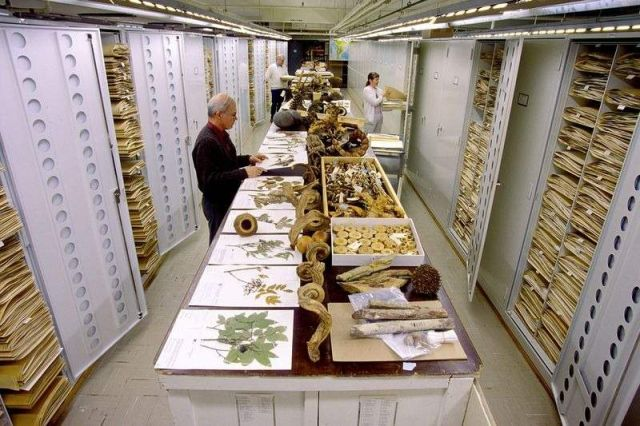 Secret Collections of The National Museum of Natural History (7)