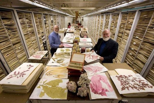 Secret Collections of The National Museum of Natural History (8)